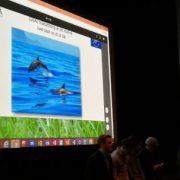 Ecobox presenterar sin produkt och samarbetet med GAIA BioMaterials.